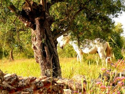 Andalusisches Pferd