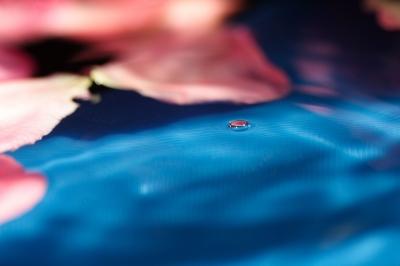 Wasserwelten mit Rosenblatt I