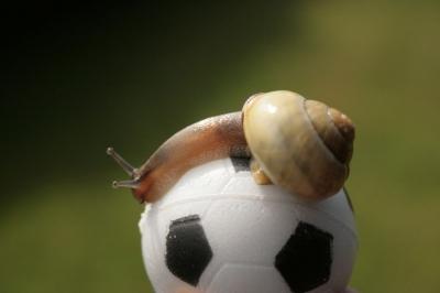 Fußballschnecke