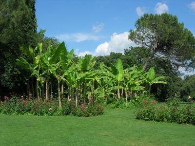 Bananenbäume im Parco Giardino Sigurta / Italien