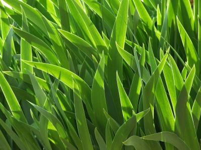 Blattgrün mit Kontur