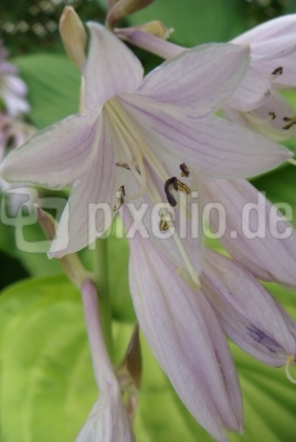 Sommerblumen 1