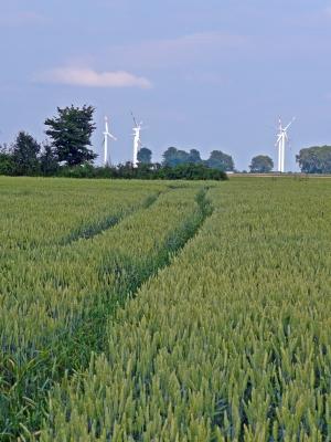 Windräder im  Feld