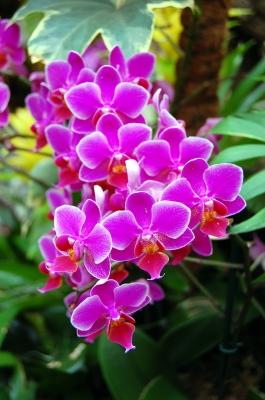 Orchideenimpression
