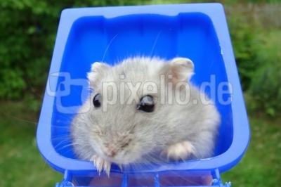 Hamster Charly 5