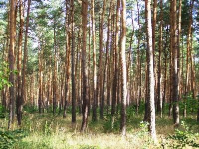Ich seh den Wald vor lauter Bäumen nicht! 2