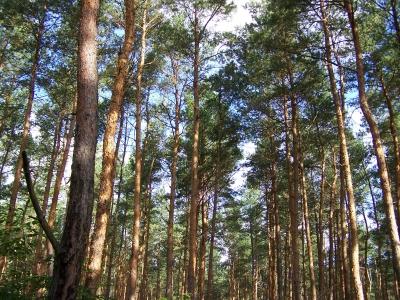 Ich seh den Wald vor lauter Bäumen nicht! 3