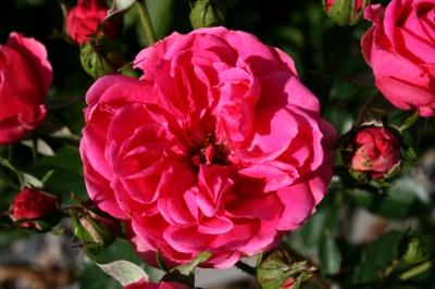 Blüten 173