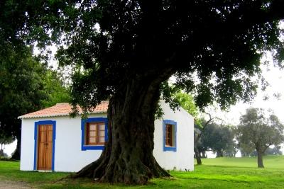 Haus auf dem Golfplatz mit Oliven