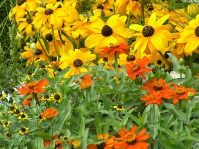 Rudbeckia und andere Sommerblumen