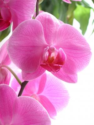 Orchidee-im-Licht