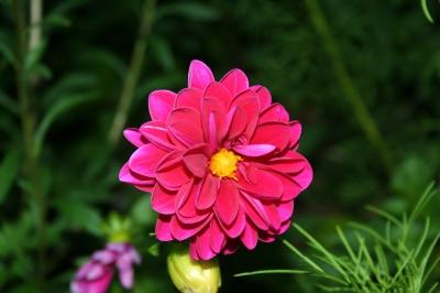Blüte 3
