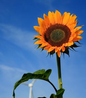 Sonne und Wind_1