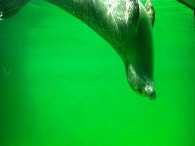 Seehundstation Norddeich / 3