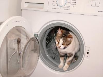 Katze im Schonwaschgang