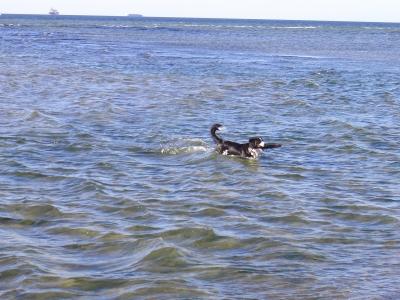 See-Hund
