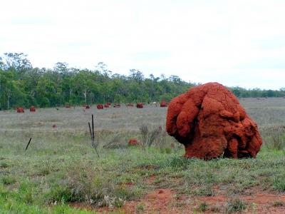 Termitenbauen 2
