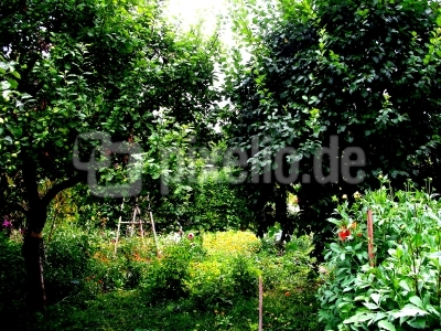 Nachbars Garten in Ilmenau