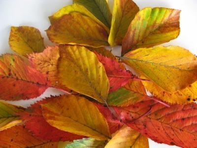 Herbstlicher Farbenrausch 4