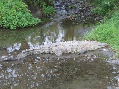 Krokodile 1