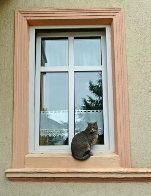 Katze im Fnester