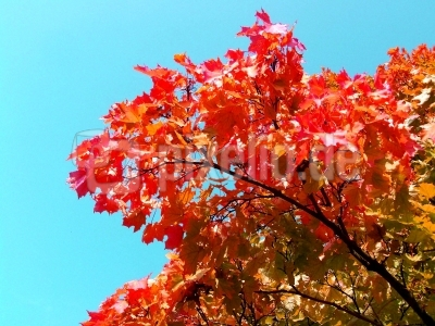 Schöner Herbst 12