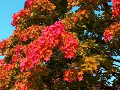 Schönes Herbstlaub 8