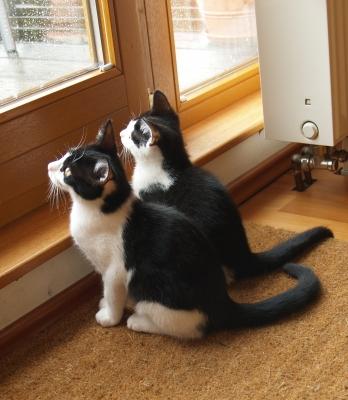 Geschwisterliebe - Leo und Lucie