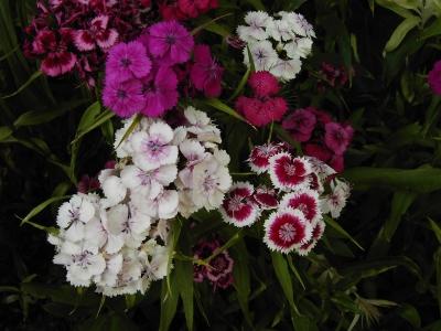 Bunter Blütenmix