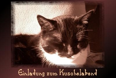"""kostenloses foto: aira's postkarten - """"einladung zum kuscheln, Einladung"""