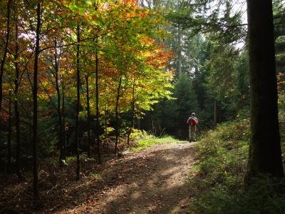 Auf dem Westweg durch den Schwarzwald