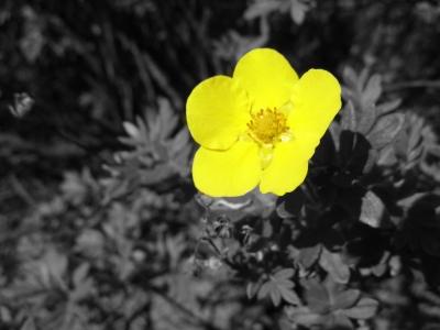 Blüte in der Hecke