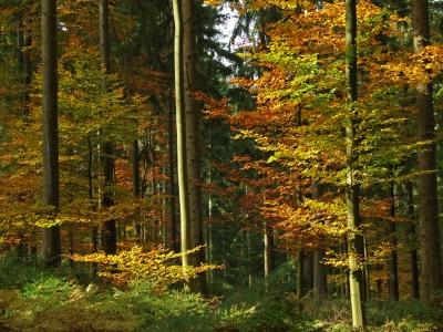 Buntes Herbstgemisch im Schwarzwald