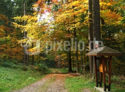 Herbstlaubwald mit Wegekarte
