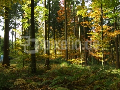 Herbstwald mit Farn