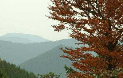 Wanderland mit Schwarzwald-Herbst