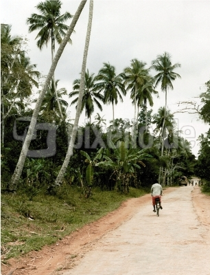 Unter Kokospalmen auf Zanzibar