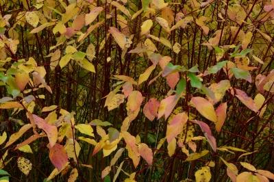 Textur Strauch nach dem Herbstregen
