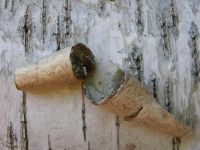 Birkenborke