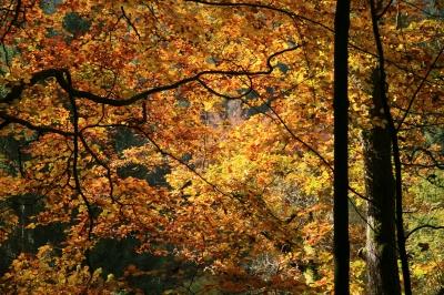 Golden leuchtet der Herbst