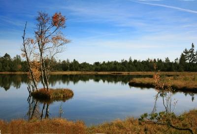 Birkeninsel im Wildsee-Moor_2