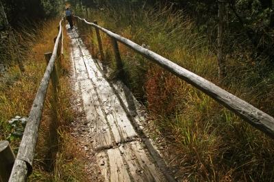Holzbohlen-Weg durch das Naturschutzgebiet Wildsee-Moor