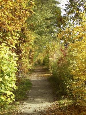 Herbstwald_4