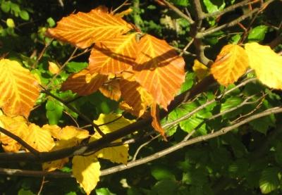 Goldene Blätter.....