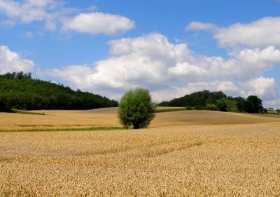 Liebliche Landschaft 2