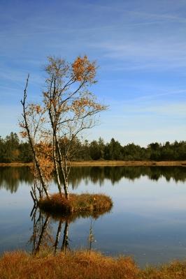 Birkeninsel im Wildsee-Moor_3