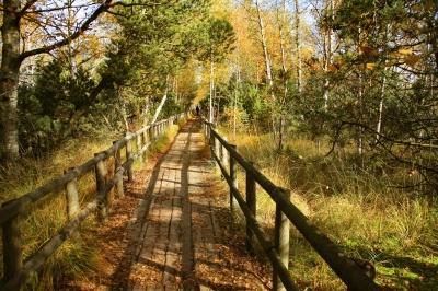 Holzbohlenweg durch das NSG Wildsee-Moor