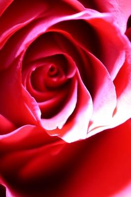 Mit Symbolen behaftet - die Rosen...