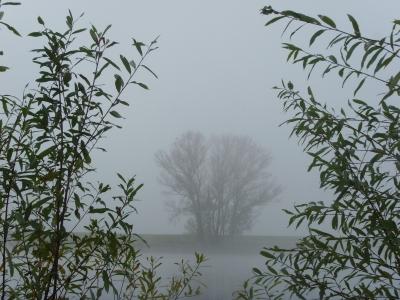 Herbstnebel über der Elbe