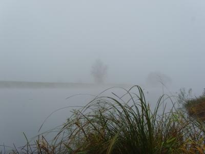 Herbstnebel über der Elbe II